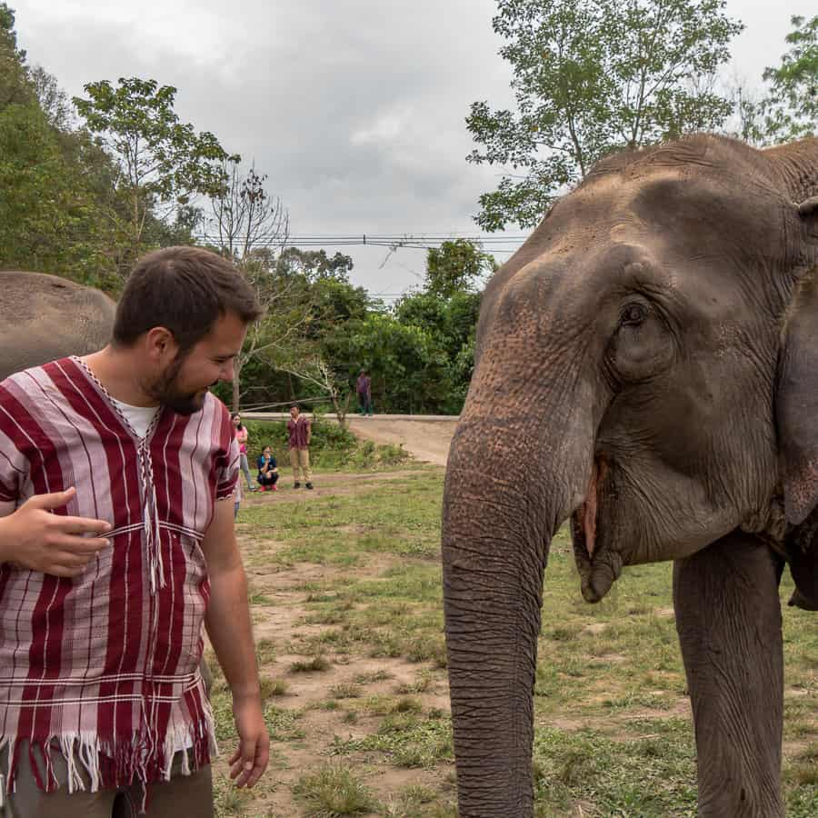One Day at Ethical Elephant Sanctuary In Thailand elephant tiago