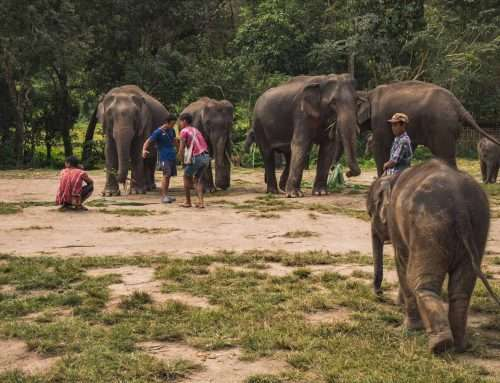 One Day at Ethical Elephant Sanctuary In Thailand