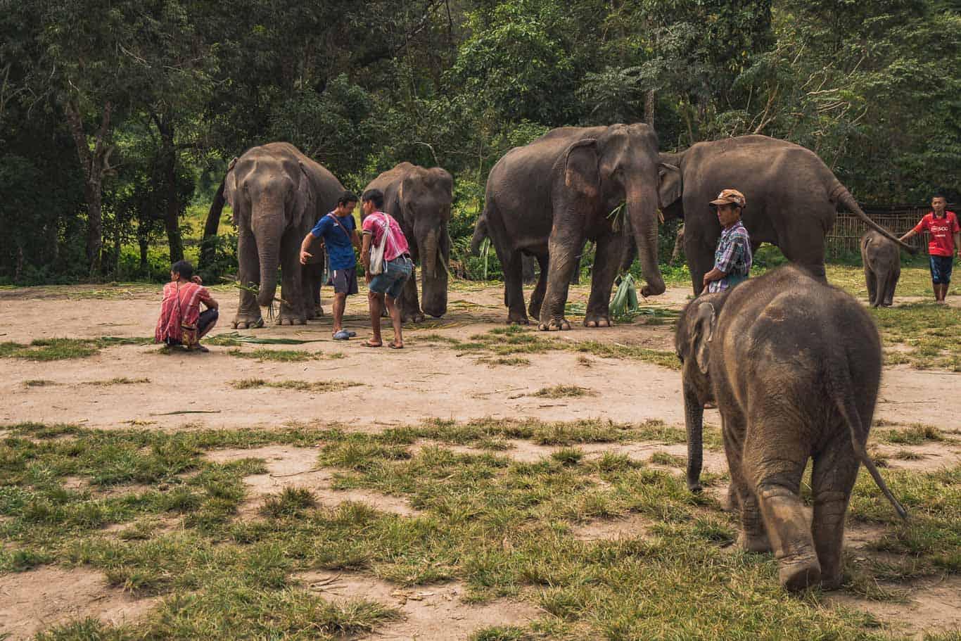 Ethical Elephant Sanctuary in Thailand slide