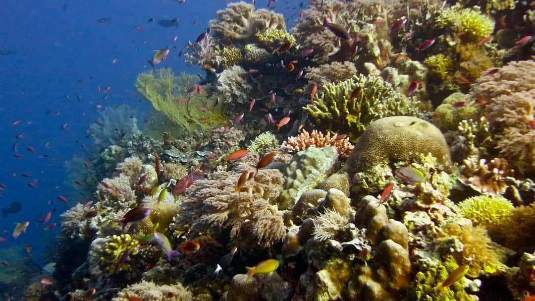 must-do-things-in-Palawan-tubbataha-reefs