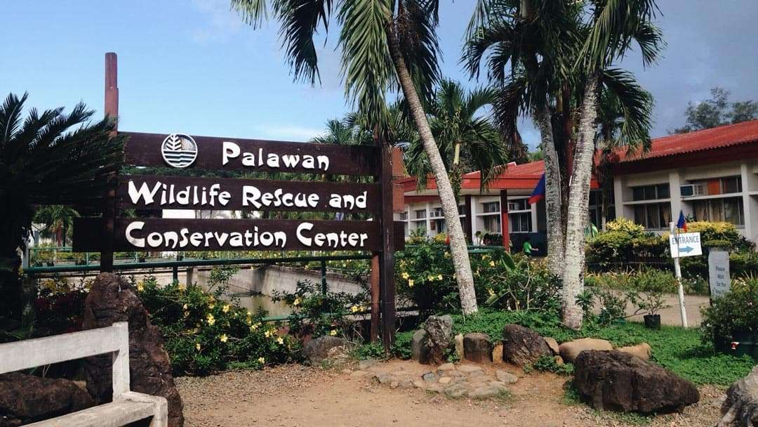 must-do-things-in-Palawan-wildlife-rescue-center