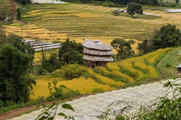day trip from chiang mai coffee tour