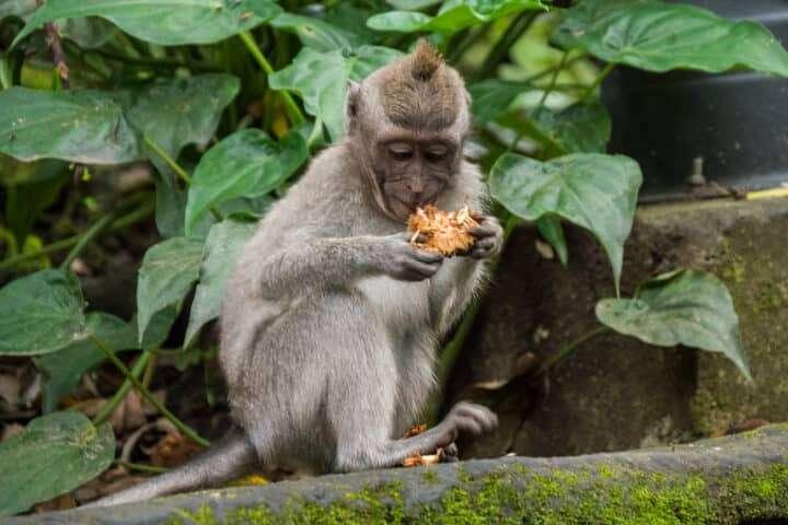 reasons-to-visit-bali-2019-5