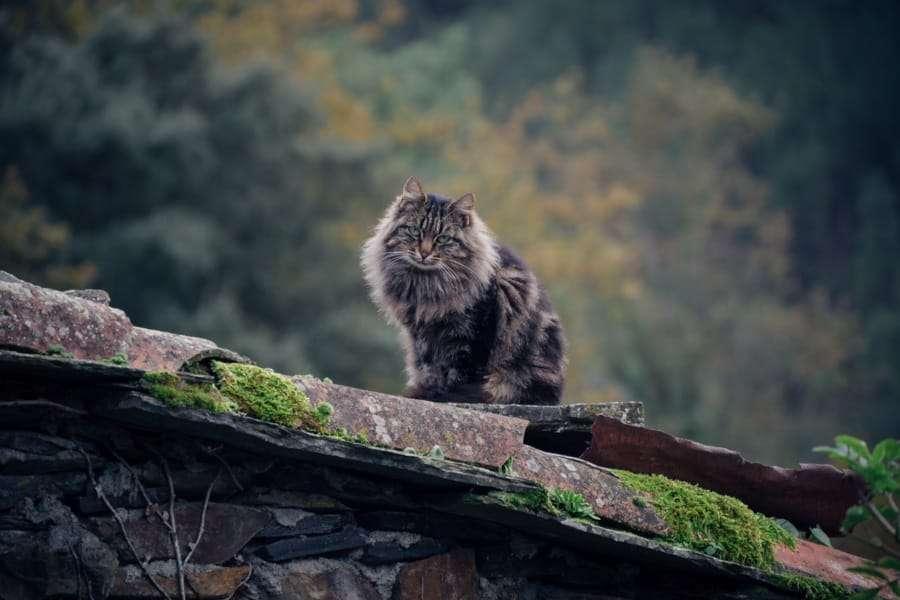 fim-de-semana-lousa-img (17) gato