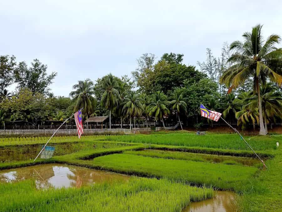 Laman Padi Rice Garden and Museum
