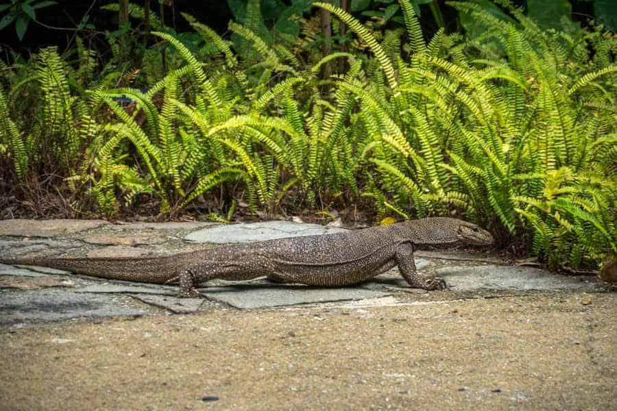 singapore-travel-itinerary jardim botanico