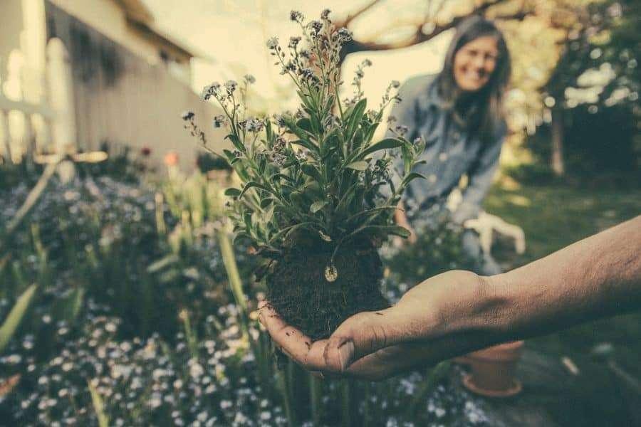 Exchange work for accommodation gardening