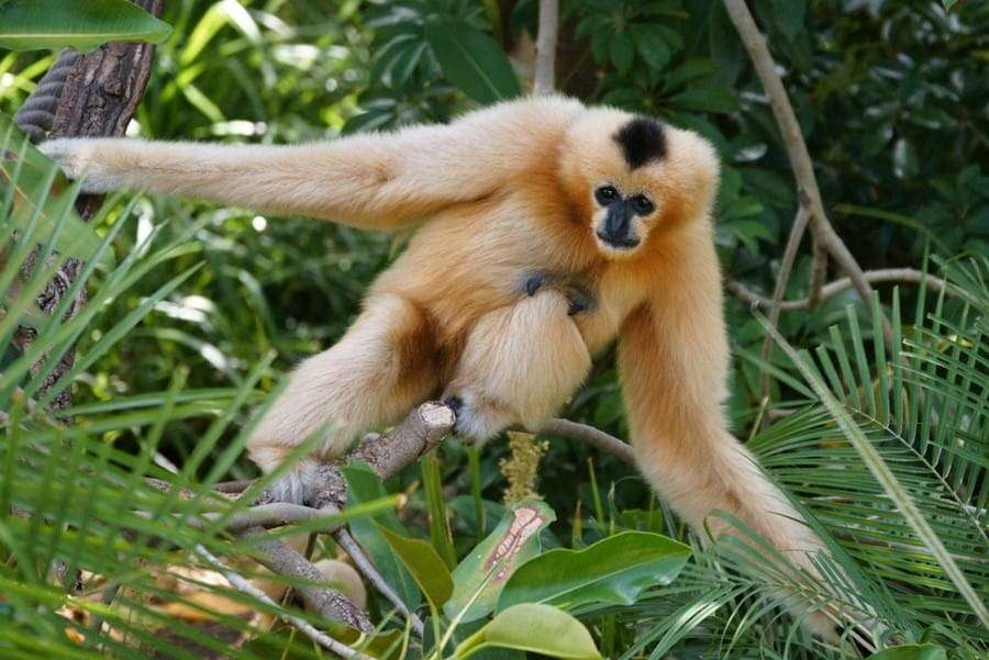 Bokeo-nature-reseve-yellow gibbon-national-parks-in-laos