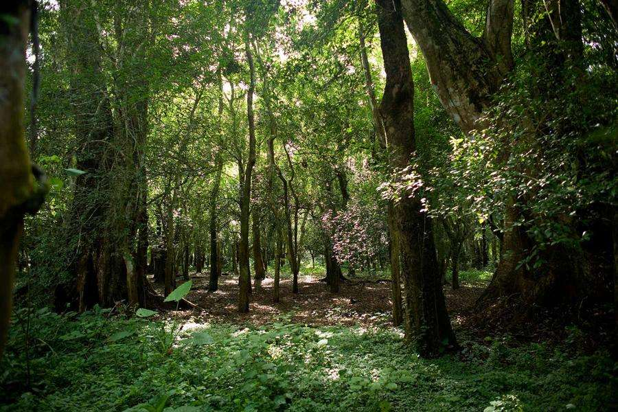 Xe Pian National Protected Laos. parks