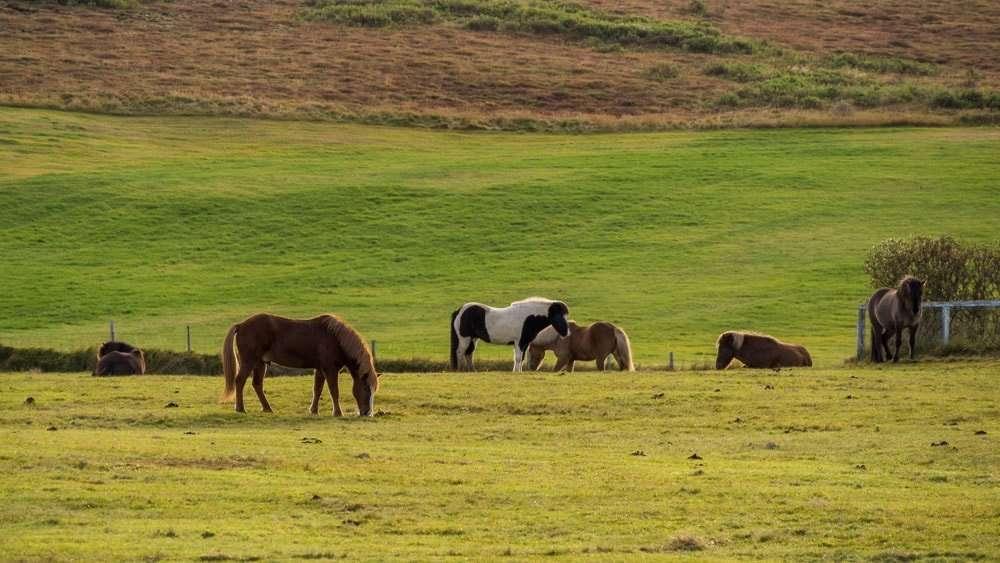 Itinerário na Arctic Coast Way - Islândia 16