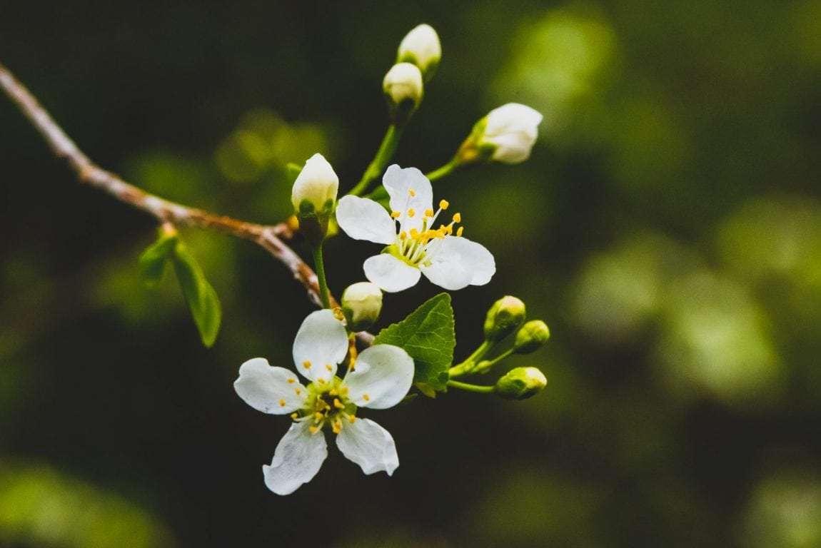 ecotourism-flower