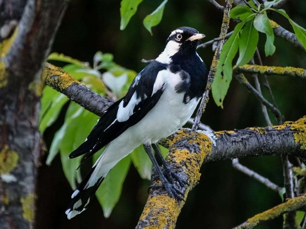 what-ecotourism-is-bird