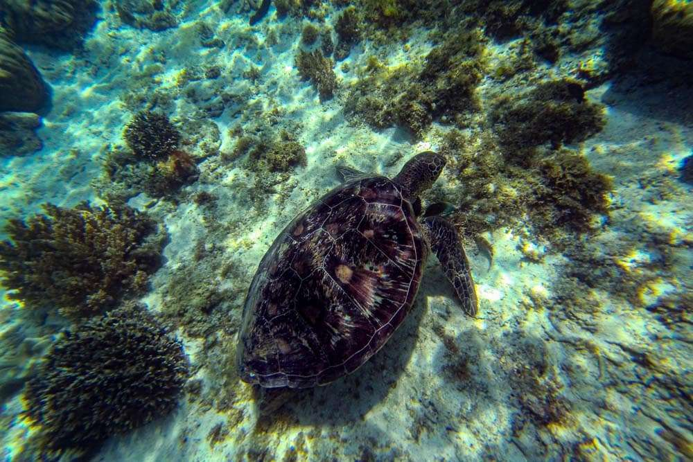 philippines-travel-itinerary-turtle
