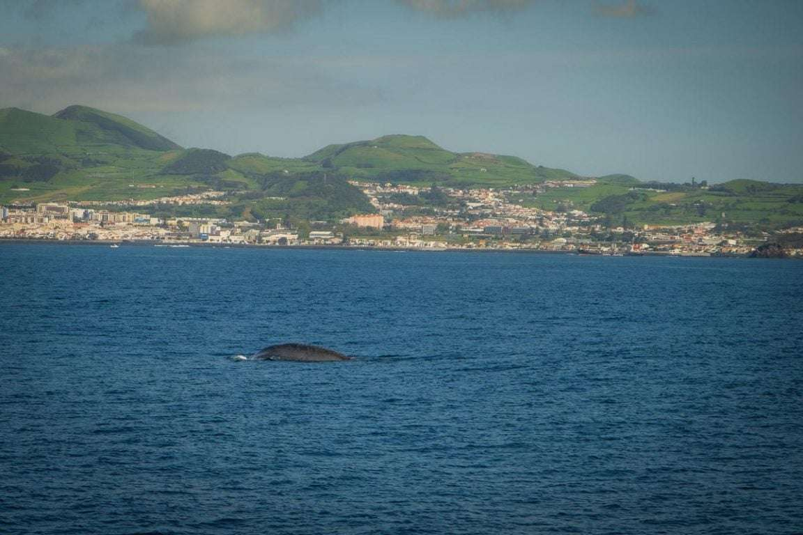 wise-travellers-sao-miguel-acores (22)